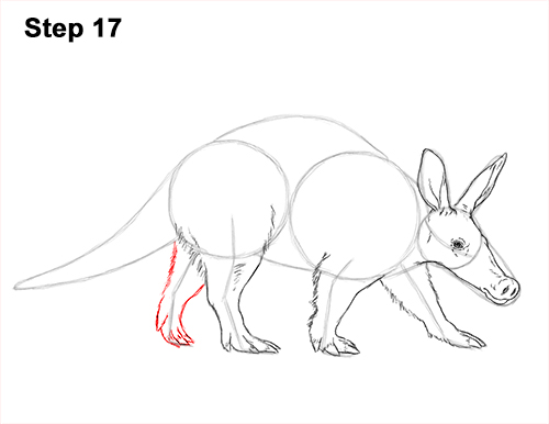 How to Draw an Aardvark Anteater Walking 17