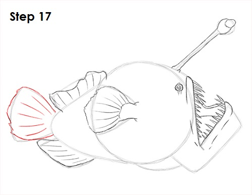 Draw Anglerfish 17
