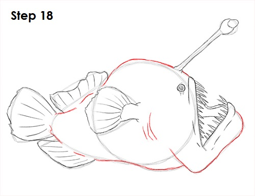 Draw Anglerfish 18