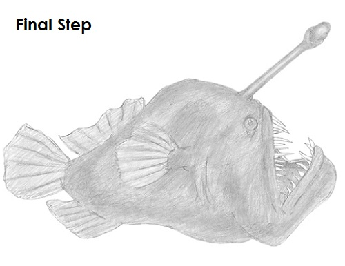 Draw Anglerfish