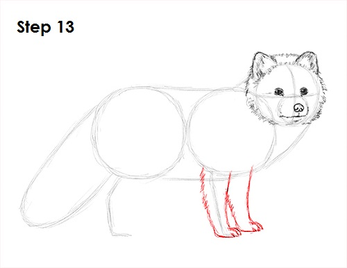 Draw Arctic Fox 13