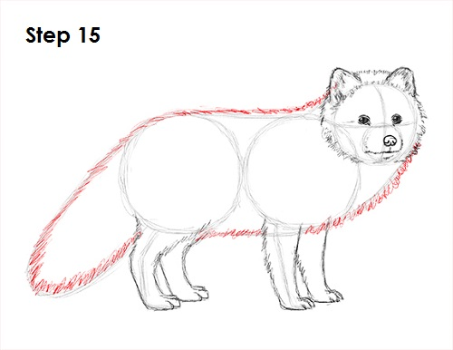 Draw Arctic Fox 15
