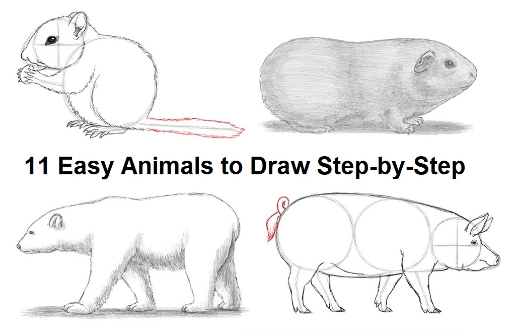 Our Easiest Animals To Draw Step By Step Great For Beginners