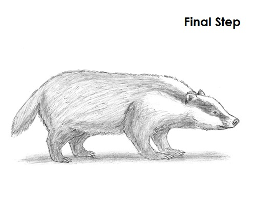 Draw Badger Final