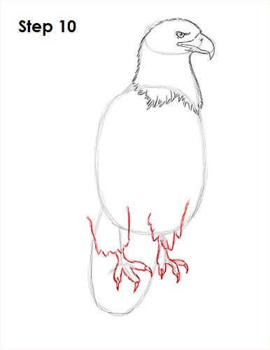 Draw Bald Eagle 10