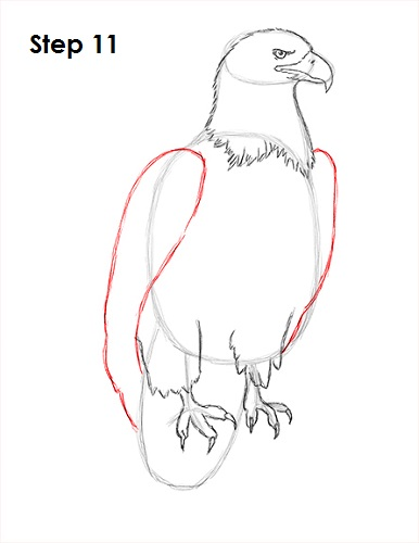 Draw Bald Eagle 11