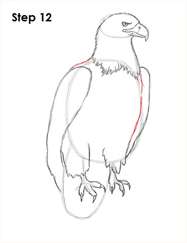 Draw Bald Eagle 12