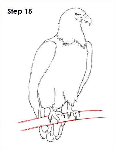 http://www.how2drawanimals.com/images/BaldEagle/draw-bald-eagle-15.jpg Eagle Drawing Easy