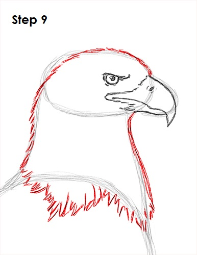 Draw Bald Eagle 9