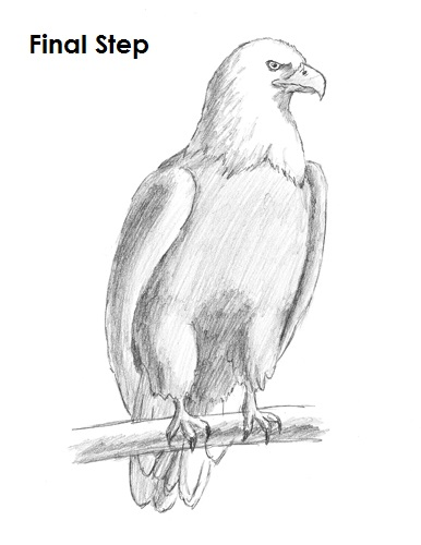 Draw bald eagle final