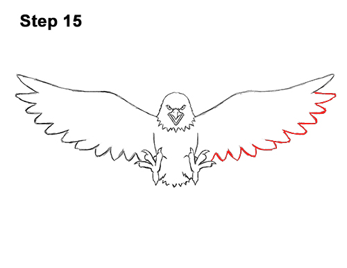 How To Draw Bald Eagle
