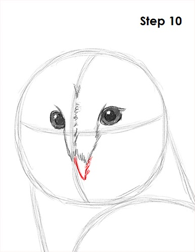 Draw Barn Owl 10