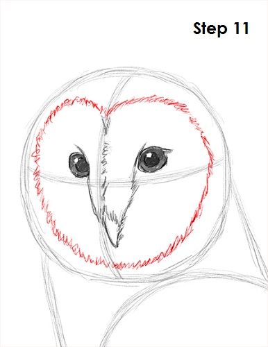 Owl beak drawing for Owl beak drawing
