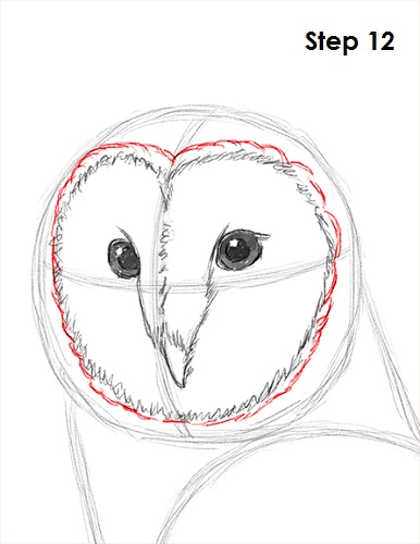 Draw Barn Owl 12