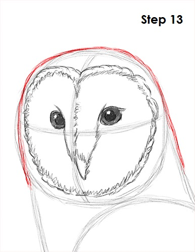 Draw Barn Owl 13