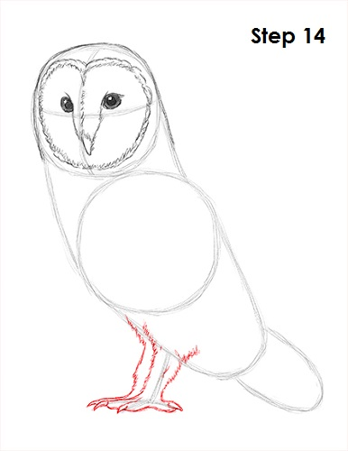 Draw Barn Owl 14