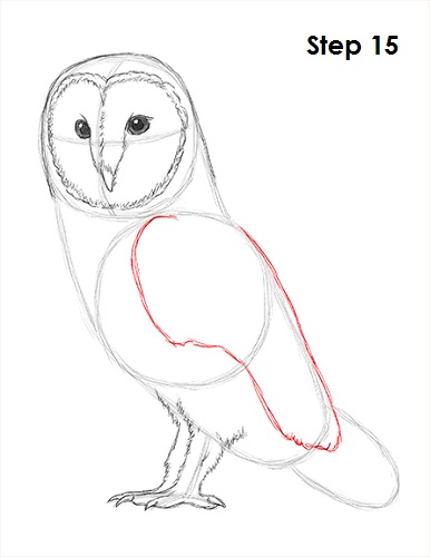 Draw Barn Owl 15