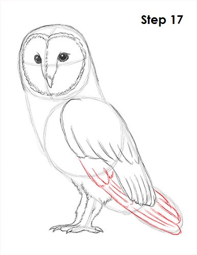 Draw Barn Owl 17