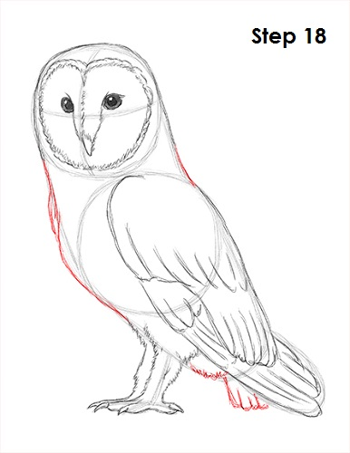 Draw Barn Owl 18