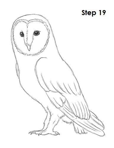 Draw Barn Owl 19