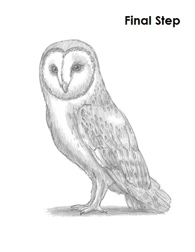 Draw Barn Owl