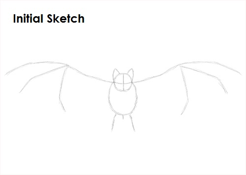 Draw Vampire Bat Sketch