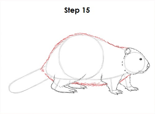how to draw a beaver wikihow