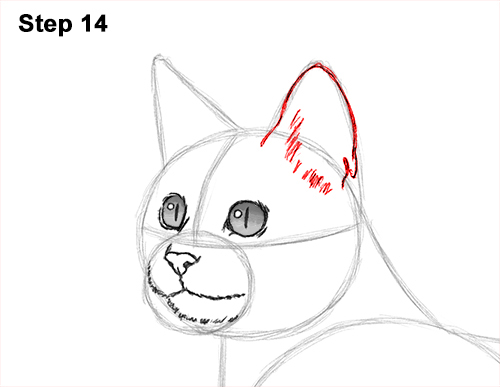 How to Draw Bengal Kitten Cat Spots 14