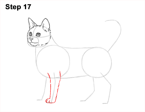 How to Draw Bengal Kitten Cat Spots 17