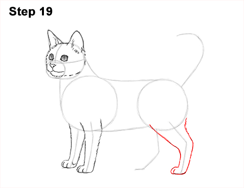 How to Draw Bengal Kitten Cat Spots 19