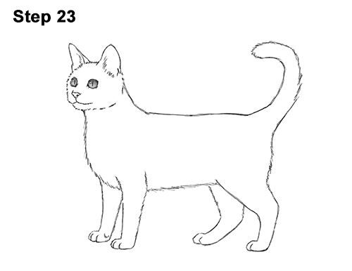 How to draw a cat bengal how to draw bengal kitten cat spots 23 ccuart Gallery