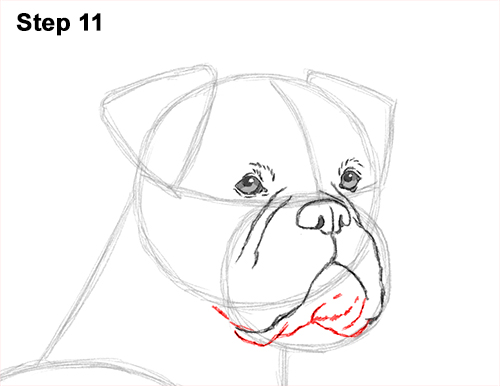 Draw Boxer Dog 11