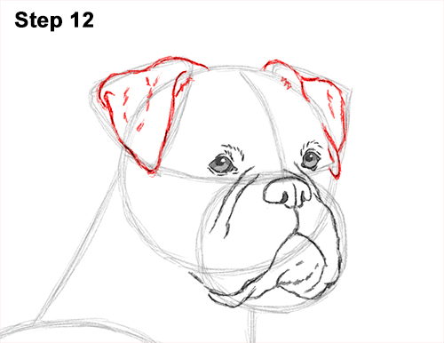 Draw Boxer Dog 12