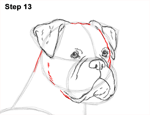 Draw Boxer Dog 13