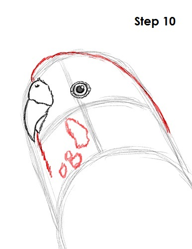Draw Parakeet Bird 10