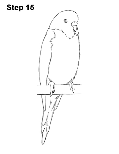 How to Draw a Budgie / Parakeet (Blue) Growling Dog Drawing