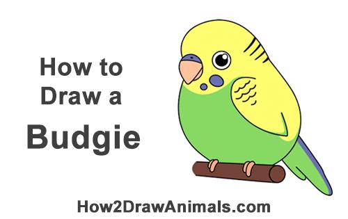 How To Draw A Budgie Cartoon