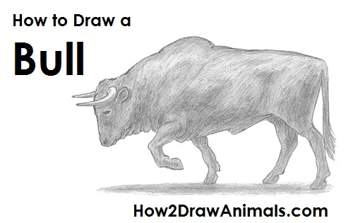How To Draw A Bull Video After Each Step At Your Own Pace