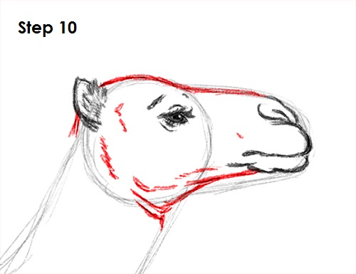 Line Drawing Of Sheep Face : Lamb drawing images at getdrawings free for personal use