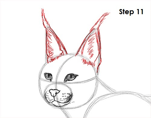 Draw Caracal 11