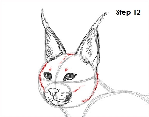 Draw Caracal 12