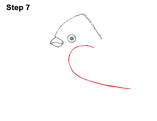 How to Draw Cute Little Cartoon Red Cardinal Snow Berries 7