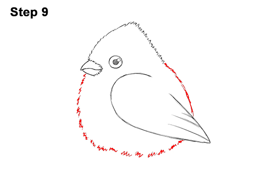 How to Draw Cute Little Cartoon Red Cardinal Snow Berries 9