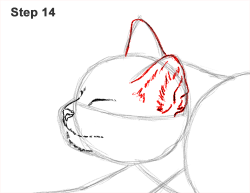 How to Draw a Tabby Kitten Cat Stretching 14