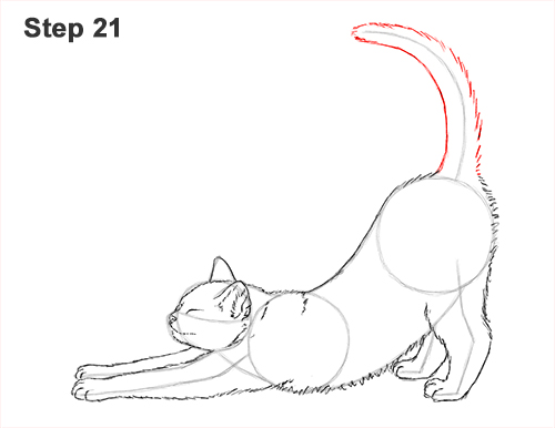How to Draw a Tabby Kitten Cat Stretching 21