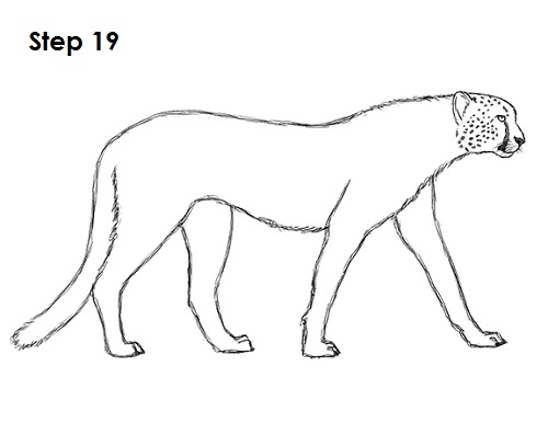 Draw Cheetah 19