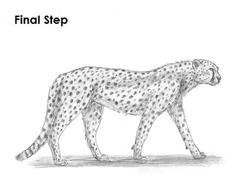 Draw Cheetah Final