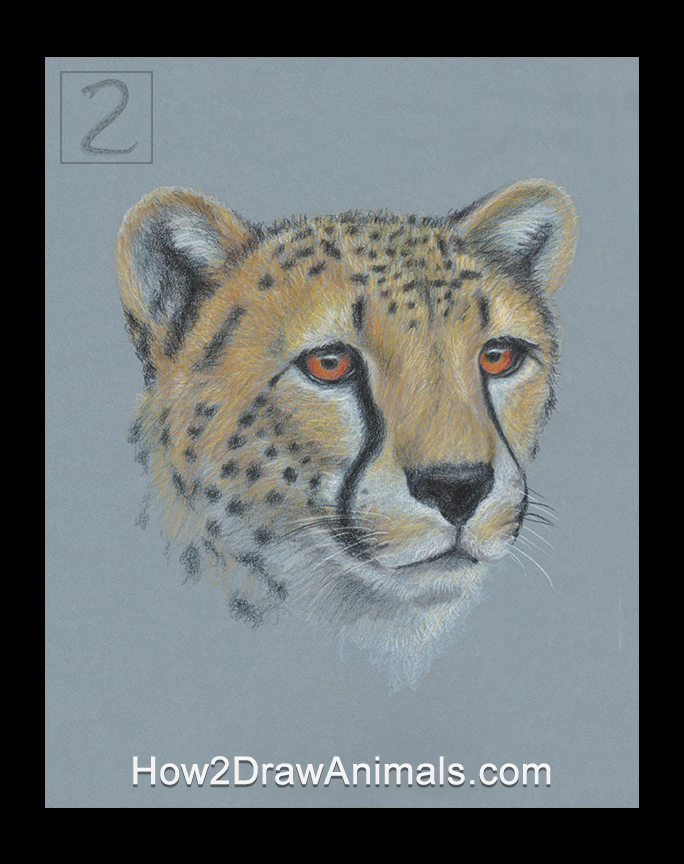 Cheetah Portrait Drawing