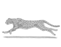 How to draw a Running Cheetah