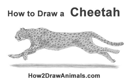 How to Draw a Cheetah Running